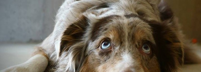 Pet's Eye Color Changing? You May Be Right